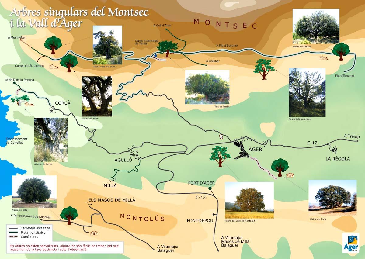 Itinerari dels arbres singulars